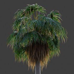 3D XfrogPlants Desert Fan Palm - Washingtonia Filifera