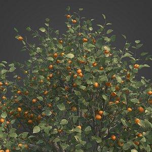 2021 PBR Apricot Collection - Prunus Armeniaca 3D model
