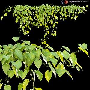 3D Epipremnum aureum - Money plant