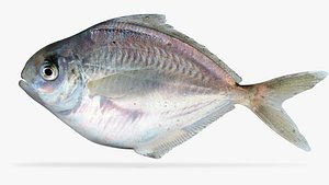 butterfish fish 3D model