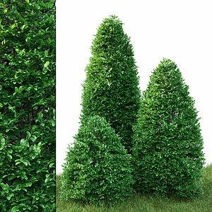 bush shrub hedge model