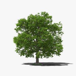 3D model walnut nut tree