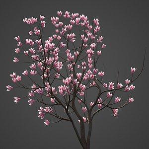 magnolia tree nature model