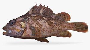 3D model Gopher Rockfish