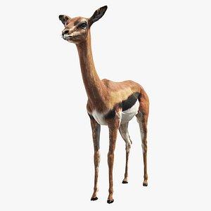 gazelle animal mammal 3D model