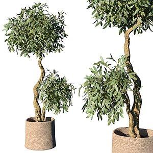 plant basket planter 3D