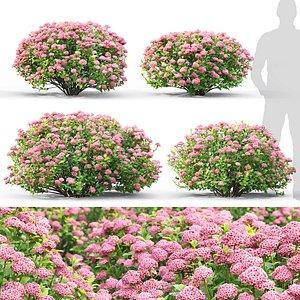 3D bush spiraea little model
