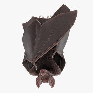 Vampire Bat Hanging model