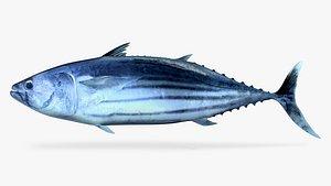 3D Skipjack Tuna model