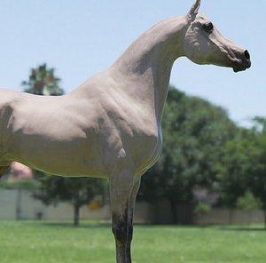 3D horse arab model
