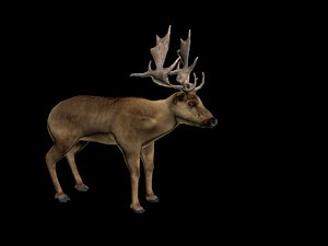 3D reindeer deer