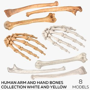 3D Human Arm and Hand Bones Collection White and Yellow - 8  models