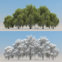 5+5 Willow Trees