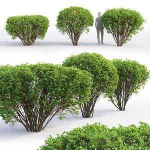 3D spirea bushes