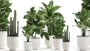 3D Houseplants in a white pot for the interior 906