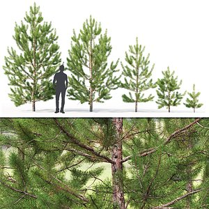 3D young trees