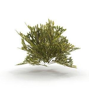 Egg Wrack seaweed V2 3D model
