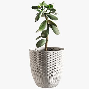 3D model Money Tree with Windows - Different Colors