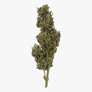 3D model Cannabis Branch 03