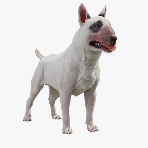 bull terrier dog 3D