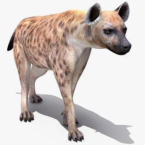 Hyena Rigged for Maya 3D model