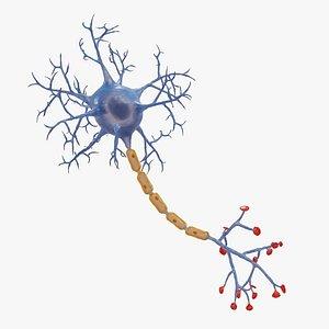 3D Neuron Rigged