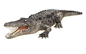 black alligator crocodile animations 3D model