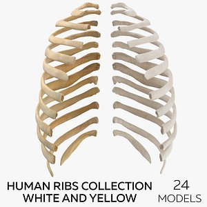 Human Ribs Collection White and Yellow - 24 models 3D model