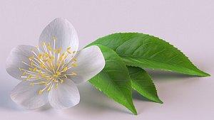 flower tea 3D model