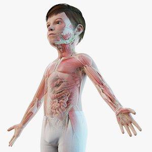 Full Kid Boy Anatomy Maya Rigged model