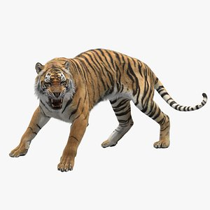 Tiger RIGGED model