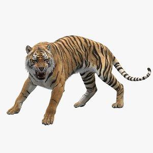 Tiger RIGGED model