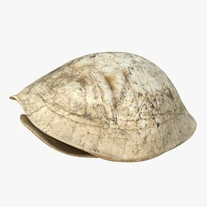 3D model turtle asian fossil