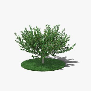 3D Hazelnut Tree