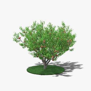 3D Peach Tree