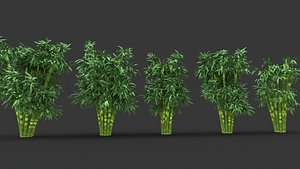 3D bamboo tree pack