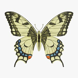 3D papilio machaon butterfly model