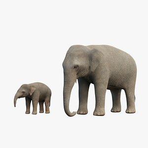 rig elephant adult baby 3D model