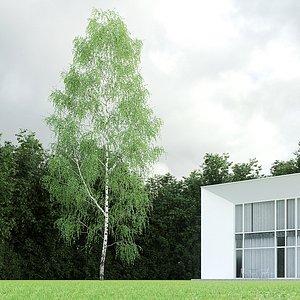 betula pendula birch 22 3D model