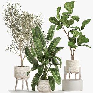 Plants in decorative white rattan baskets 1017 3D