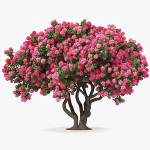 Pink Rhododendron Tree 3D model
