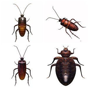 3D Cockroach and bedbug insect collection