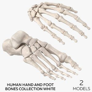 3D model Human Hand and Foot Bones Collection White - 2 models