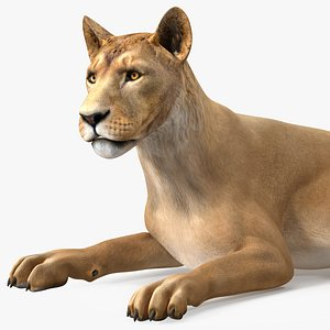 Young Lion Rigged for Modo 3D model