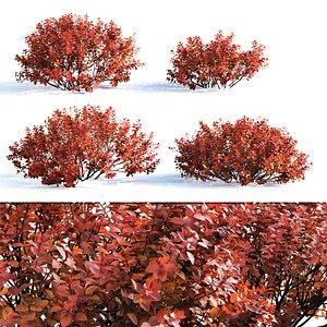 shrubs betulifolia 3D model