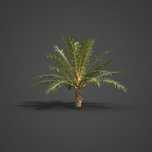 palm tree nature model