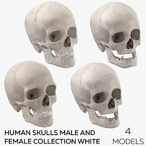 Human Skulls Male And Female Collection White  - 4 models 3D