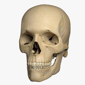 3D exploded human Skull