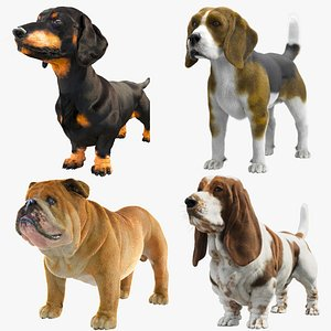 Dogs Collection 3D model