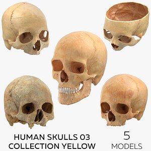 3D Human Skulls 03 Collection Yellow - 5 models model
